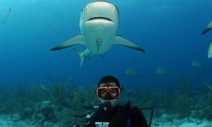 海底に広がる壮観な世界!世界のダイビングスポット