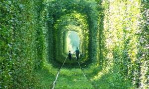 緑の木々に囲まれたウクライナにある美しい『愛のトンネル』